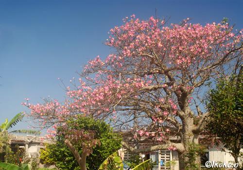 枝を広げる大木