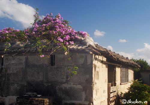 花に覆われた屋根