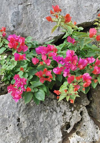 岩の割れ目から咲く花