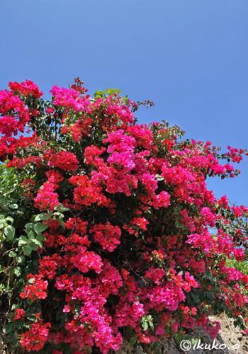 華やかに咲く花