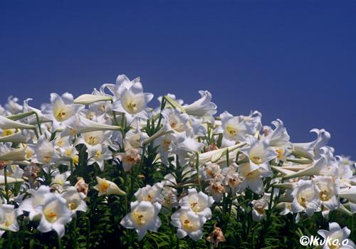 ひしめきあって咲く花々