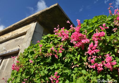 塀を覆う花々