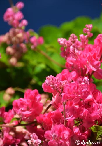可愛いピンクの小花