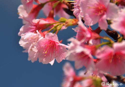 うつむき加減に咲く花