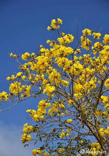 空から降り注ぐ花々