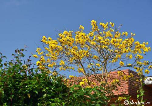 民家の庭の大木