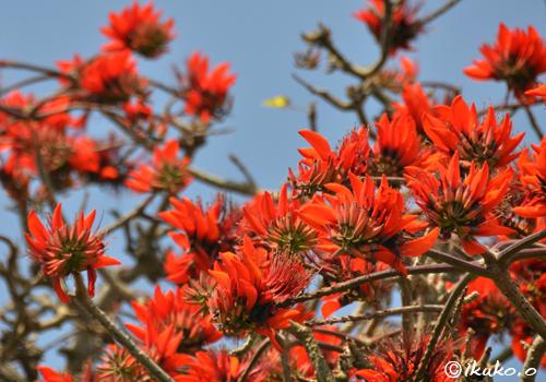 折り重なるように咲く花々