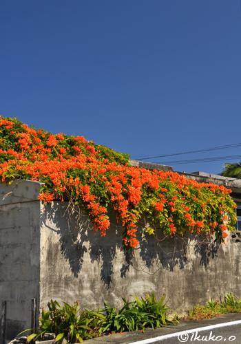 青空と火炎の花