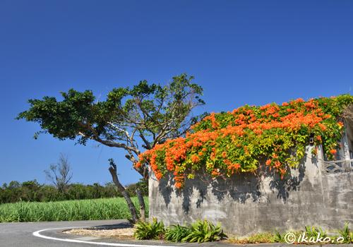 オレンジ色の花の屋根