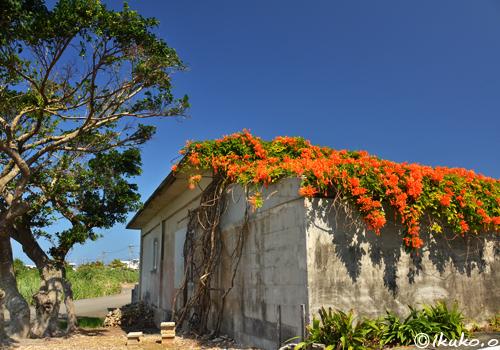 屋根を覆い尽くす花