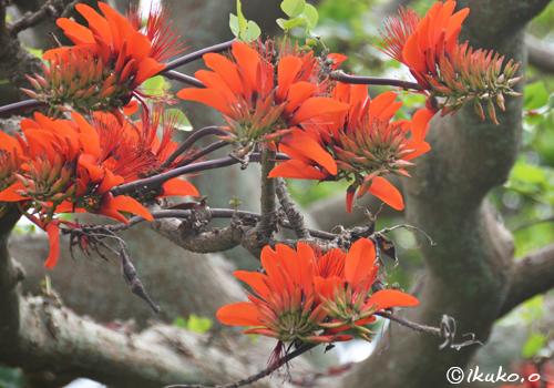 美しい花と太い幹