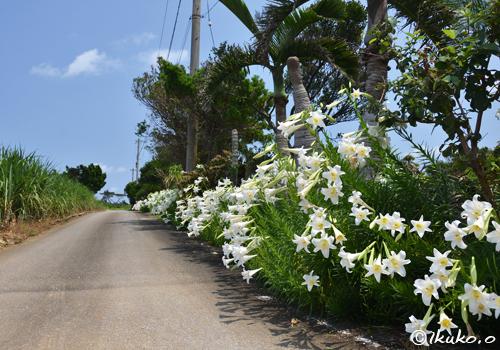 百合の咲く道