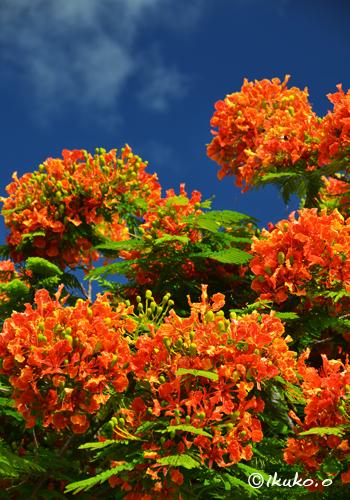 色鮮やかに咲く花