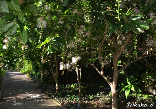 朝日に照らされる木