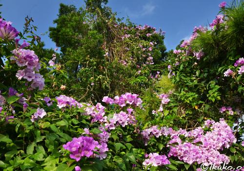 花と緑の庭園