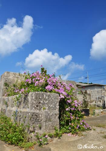 琉球石灰岩の塀と花の塊