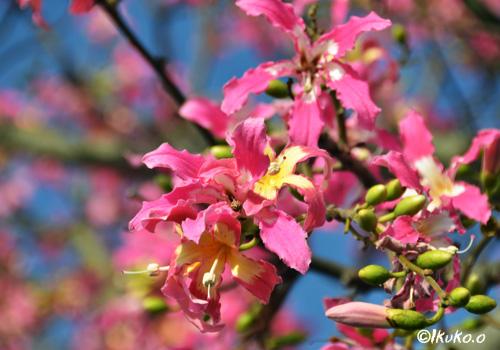 星型のピンクの花