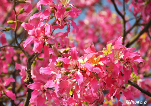 華麗なピンクの花々