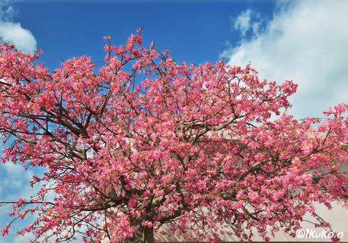 豪華な花の塊