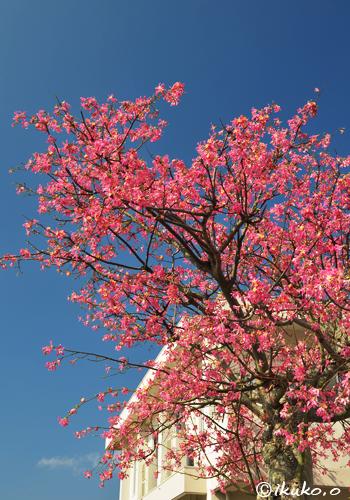 青空に枝をのばす大木