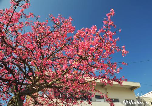 豪華なピンクの塊