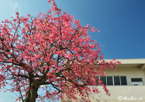 桜のようなピンクの花