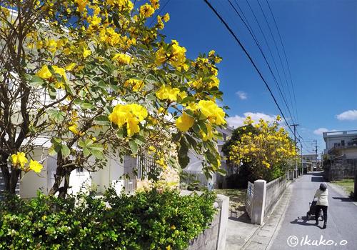イッペーの咲く路地