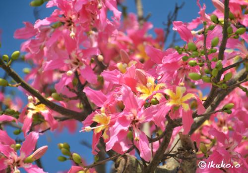 可愛らしいピンクの花