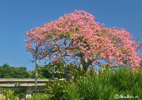 民家の庭の見事な大木