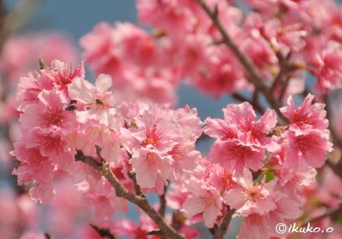 可憐なピンクの花