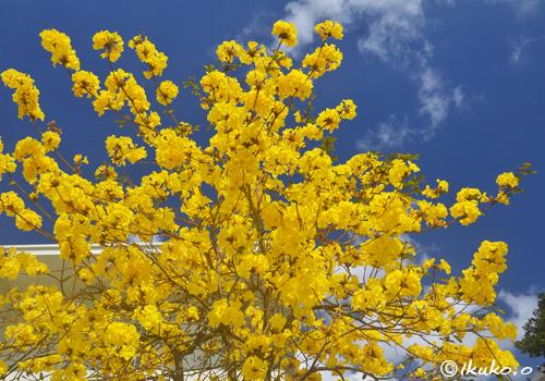 頭上から降り注ぐ花