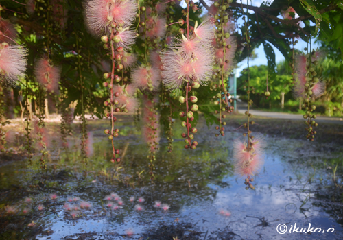 水面に落ちた花