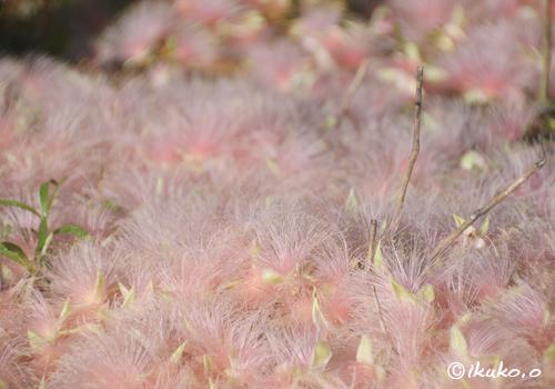 降り積もったピンクの花