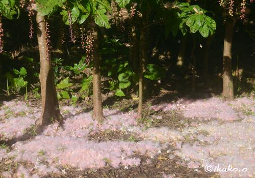 ピンクの花の絨毯