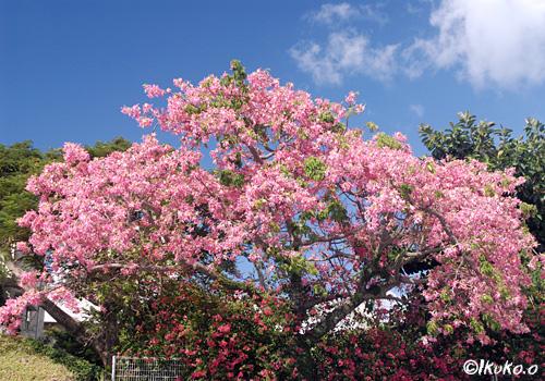 大木に咲き乱れる花