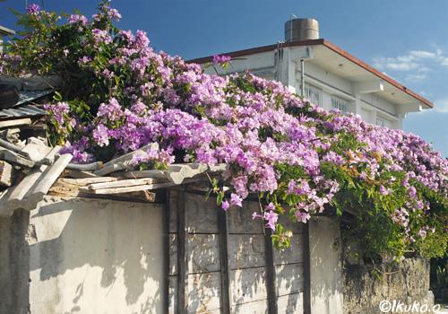 小屋の屋根を覆う花