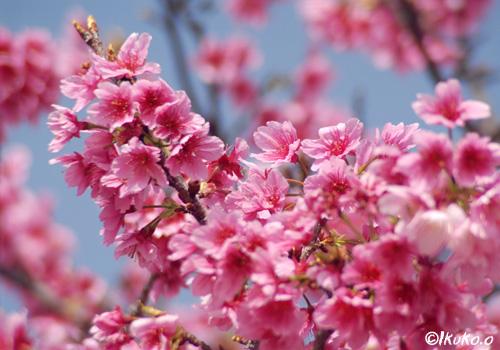 咲き乱れる花