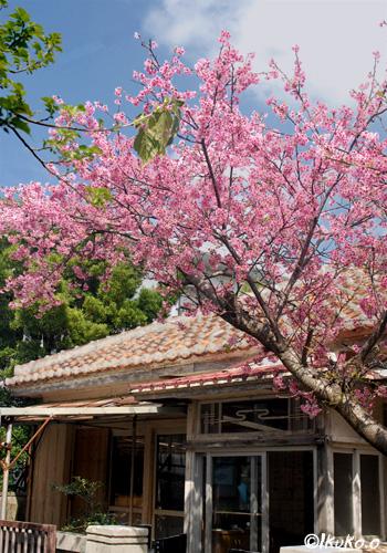 古い民家と寒緋桜