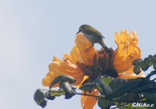 花とメジロ