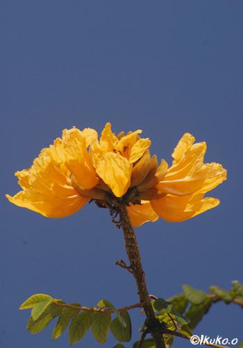 青空にまっすぐのびる花