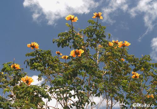 緑に灯る黄色い花