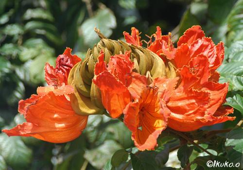 トロピカルな花