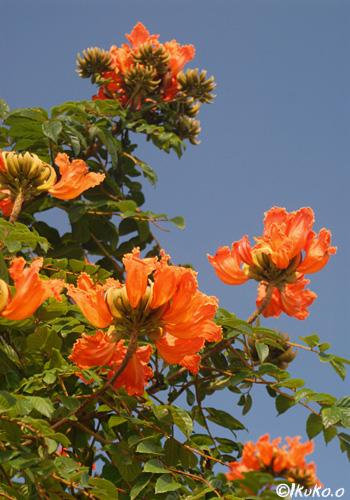オレンジ色の松明