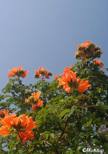 オレンジ色の炎