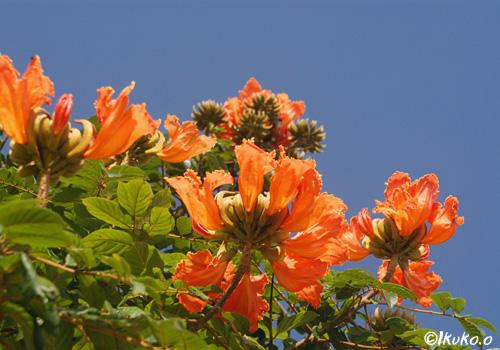 満開の花々