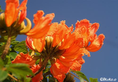 青空にむけて咲く花