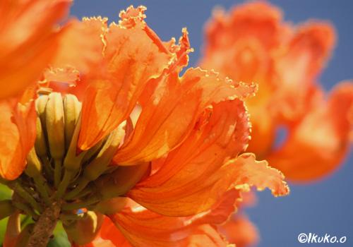 青空に向かって咲く花