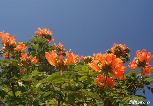 緑に映えるオレンジ