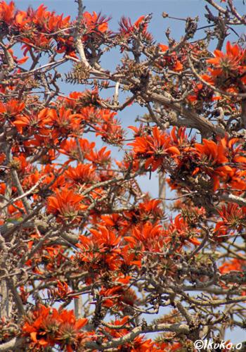 花でいっぱいの木