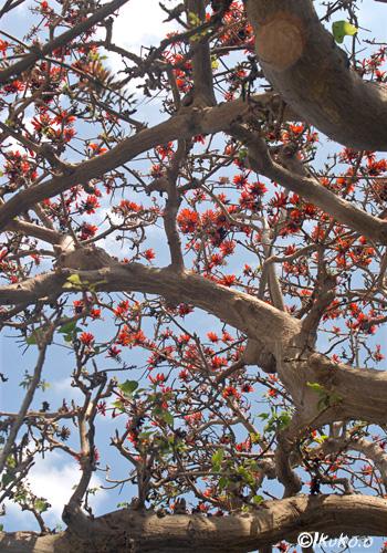 生命力にあふれる大木